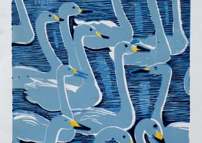 Whooper-Swans-212